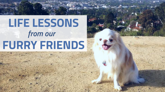 Life Lessons from Our Furry Friends